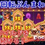 【オンラインカジノ】人気スロット3000回転ぶんまわし!固定ワイルドと番犬を止めまくれ!【THE DOG HOUSE】【BONSカジノ】